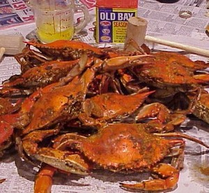 Maryland_crab