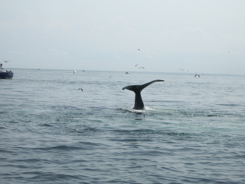 Whale_watch_009